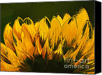 Yellow Flower Canvas Prints - Petales de Soleil - a41b Canvas Print by Variance Collections