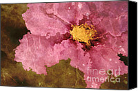 Textured Floral Canvas Prints - Petaline - ar01bt04c2 Canvas Print by Variance Collections