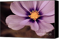Flower Photography Canvas Prints - Petaline - p04d Canvas Print by Variance Collections