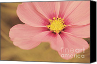 Flower Photography Canvas Prints - Petaline - p05a Canvas Print by Variance Collections