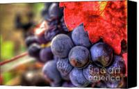 Blue Grapes Canvas Prints - Petite Syrah 23 Canvas Print by Mars Lasar