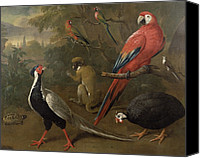 Pheasant Painting Canvas Prints - Pheasant Macaw Monkey Parrots and Tortoise  Canvas Print by Charles Collins