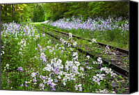 Scenic Roads Canvas Prints - Phlox Tracks Canvas Print by Bill  Wakeley