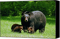 Black Bear Cubs Canvas Prints - Picnic Crashers Canvas Print by Lori Tambakis