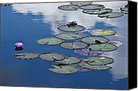 Little Birds Canvas Prints - Picturesque Water Lily Pads And Flowers Canvas Print by Jason Edwards