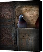 Industrial Canvas Prints - Pigeon of the City Canvas Print by Bob Orsillo