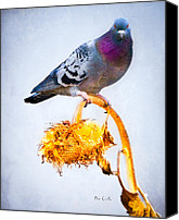 Decorative Art Canvas Prints - Pigeon On Sunflower Canvas Print by Bob Orsillo