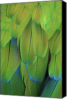 Aves Canvas Prints - Piha Oe I Ka Maikai Canvas Print by Sharon Mau