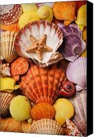 Sea Aquatic Canvas Prints - Pile of seashells Canvas Print by Garry Gay