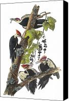 Woodpecker Canvas Prints - Pileated Woodpecker Canvas Print by John James Audubon