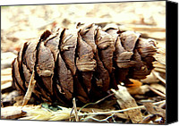 Forest Floor Canvas Prints - Pine Cone Canvas Print by Cindy Wright