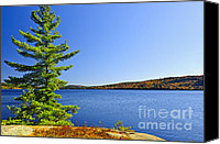 Canada Canvas Prints - Pine tree at lake shore Canvas Print by Elena Elisseeva