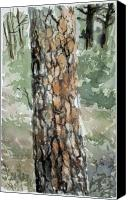 State Park Painting Canvas Prints - Pine Tree Canvas Print by Karen Boudreaux
