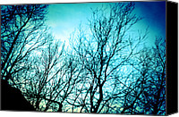 Trees Special Promotions - Pinhole camera shoot of trees in winter Canvas Print by Ulrich Schade