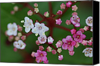 Pink Flower Branch Canvas Prints - Pink And White Flowers Canvas Print by Picture By La-ong