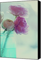Indoors Canvas Prints - Pink And White Ranunculus Flowers In Vase Canvas Print by Isabelle Lafrance Photography