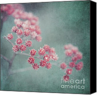 Weed Canvas Prints - Pink Beauty Canvas Print by Priska Wettstein