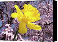 Tree Blossoms Canvas Prints - Pink Blossom Spring Trees Yellow Daffodil Flower Baslee Troutman Canvas Print by Baslee Troutman Fine Art Collections