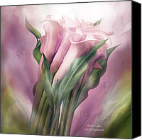 Calla Lily Canvas Prints - Pink Callas Canvas Print by Carol Cavalaris