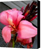 Canna Canvas Prints - Pink Canna Canvas Print by Renate Nadi Wesley