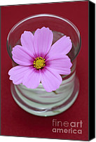 Pink Flower Canvas Prints - Pink Flower Canvas Print by Frank Tschakert