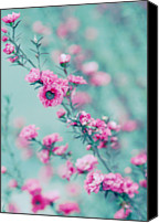 Pink Flower Branch Canvas Prints - Pink Flowers On Teal Canvas Print by Tina Lee Studio