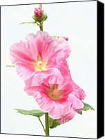 Steve Augustin Canvas Prints - Pink Hollyhock Canvas Print by Steve Augustin