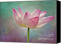 Lotus Canvas Prints - Pink Lotus Blossom Canvas Print by Susan Candelario
