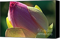Lotus Pond Canvas Prints - Pink lotus bud Canvas Print by Heiko Koehrer-Wagner
