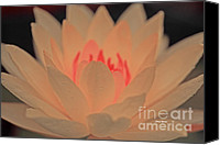 Lotus Art Canvas Prints - Pink Lotus Canvas Print by Cheryl Young