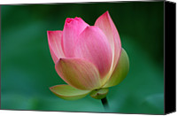 Lotus Bud Canvas Prints - Pink Lotus Flower Canvas Print by David Gunter - Jackson TN