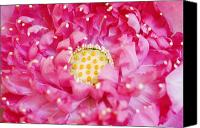 Lotus Bud Canvas Prints - Pink Lotus Canvas Print by Ray Laskowitz - Printscapes