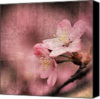 Pink Canvas Prints - Pink Love Canvas Print by Joel Lopez