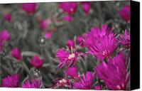 Selective Color Canvas Prints - Pink Canvas Print by Mike Horvath