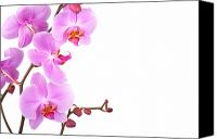 Copy Space Canvas Prints - Pink orchids Canvas Print by Jane Rix
