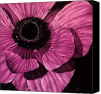 Photorealism Canvas Prints - Pink Poppy Canvas Print by Linda Hoard