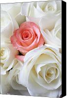 Decoration Canvas Prints - Pink rose among white roses Canvas Print by Garry Gay