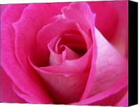 Rose Photo Canvas Prints - Pink Rose Canvas Print by Amy Fose
