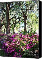 Savannah Square Canvas Prints - Pink Savannah Azaleas Canvas Print by Carol Groenen