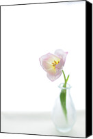 Rotterdam Canvas Prints - Pink Tulip In Glass Vase On White Background Canvas Print by Photo by Ira Heuvelman-Dobrolyubova