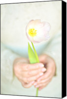 Adults Only Canvas Prints - Pink Tulip In Womans Hands Canvas Print by Photo by Ira Heuvelman-Dobrolyubova