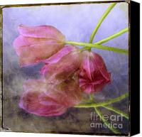 Fuchsia Canvas Prints - Pink tulips Canvas Print by Bernard Jaubert