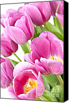 Beautiful Pink Flowers Canvas Prints - Pink tulips Canvas Print by Elena Elisseeva