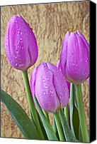 Tulip Canvas Prints - Pink Tulips Canvas Print by Garry Gay