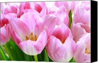 Pink Tulips Canvas Prints - Pink Tulips Canvas Print by Margaret Hood