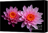 Florida Flowers Canvas Prints - Pink Twins Canvas Print by Sabrina L Ryan