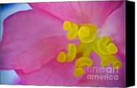 (c) 2010 Canvas Prints - Pink Wax Begonia Canvas Print by Ryan Kelly
