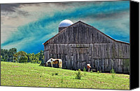 Country Scenes Photo Canvas Prints - Pinto Summer Canvas Print by Jan Amiss Photography