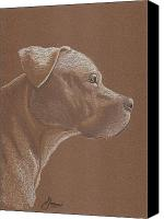 Bulls Drawings Canvas Prints - Pit Bull Canvas Print by Stacey Jasmin