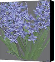 Lovely Looking Flower Canvas Prints - Plaster Hyacinth Canvas Print by Debra     Vatalaro